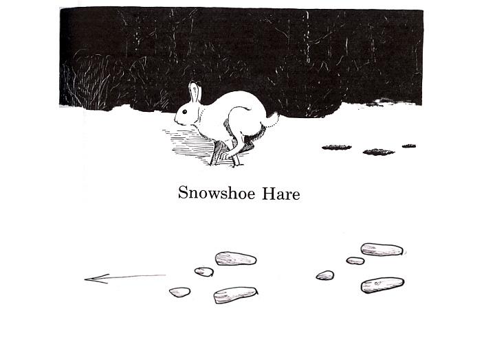 snowshoe hares – Ramekin Cottage