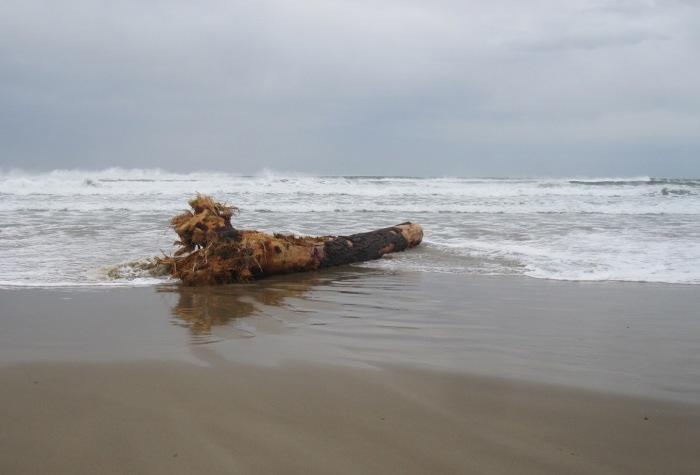 beachlog