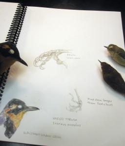 birdpage