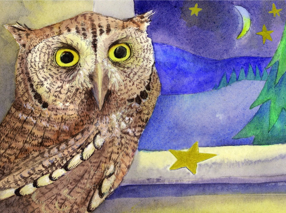 Western Screech Owl & the Star for a New Year