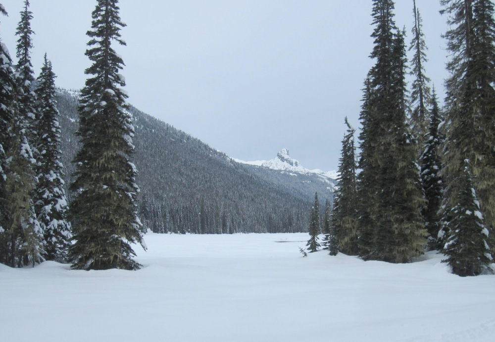 wintertucquala