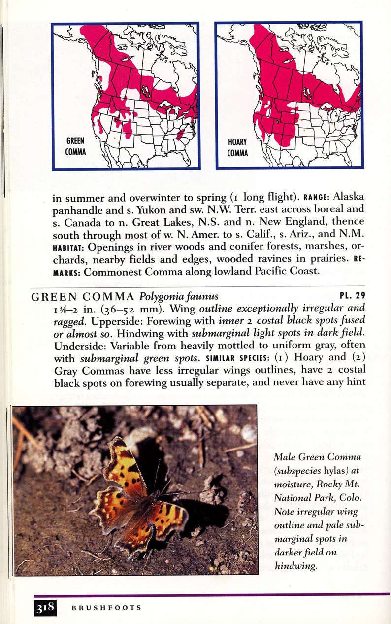 From Peterson's Guide to Western Butterflies by Opler and Butler